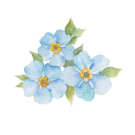 Forget-me-not flowers isolated on white background. watercolor hand drawn illustration. Çizim