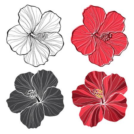 hibisco: Hibisco. conjunto de flores de hibisco aislados sobre fondo blanco.