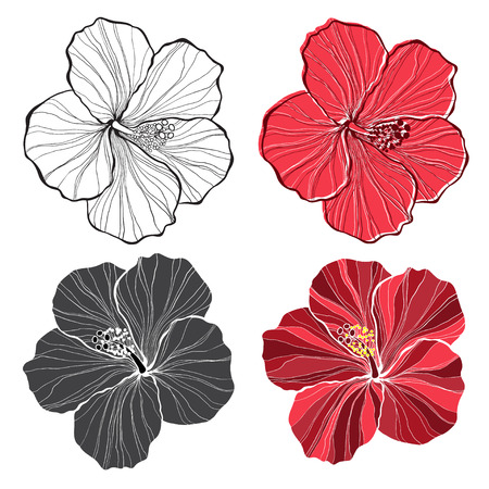 hibiscus: Hibiscus. set of hibiscus flowers isolated on white background. Illustration