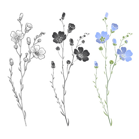 Flax plant with flowers and buds. Vector set. Hand drawn illustration, isolated elements for design on a white background. Illustration