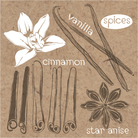 kraft paper: Spices. Cinnamon, vanilla and star anise.Vector set, hand drawn illustrations. Elements isolated on kraft paper background.