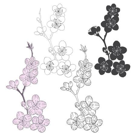 cerezos en flor: Conjunto de ramas de cerezo en flor aislados sobre fondo blanco. Vector dibujado a mano ilustración, croquis. Elementos para el diseño.