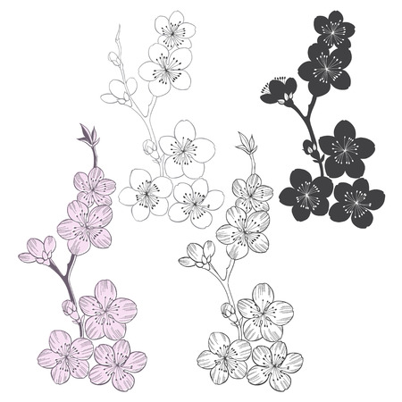 black cherry tree: Set of flowering cherry branches isolated on white background. Hand drawn vector illustration, sketch. Elements for design.