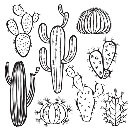 hand drawn flower: Cactus isolated on white background.  Illustration