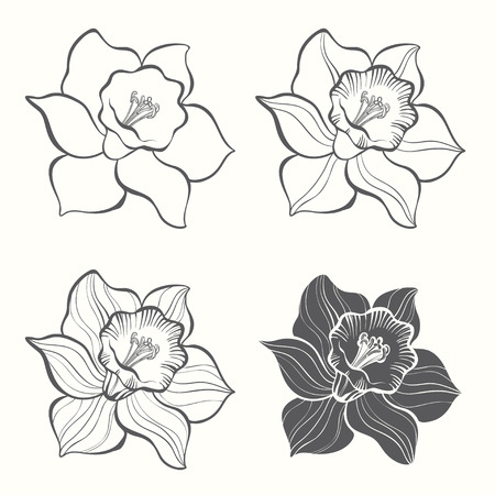 Set of spring flowers narcissus isolated on white background. Hand drawn vector illustration, sketch. Elements for design.