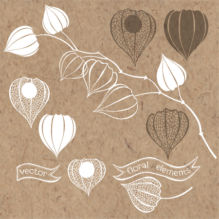 kraft paper: Physalis set. Vector elements isolated on kraft paper background.