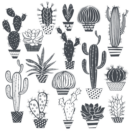 cactus botany: Cactus and succulents isolated on white background. Vector, hand drawn set illustration.