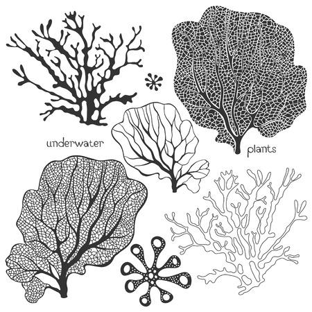 Ensemble de plantes sous-marines de bande dessinée. Vecteur coraux et les algues isolées.