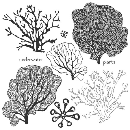 Set of cartoon underwater plants. Vector isolated corals and algae.