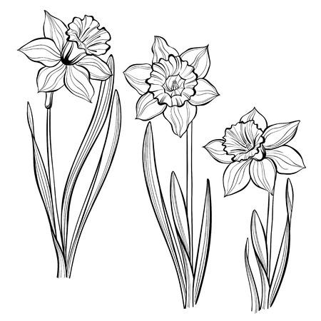 Set van lentebloemen narcissen geïsoleerd op een witte achtergrond. Hand getrokken vector illustratie, schets. Elementen voor het ontwerp.