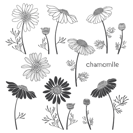 camomile tea: Chamomile, isolated elements for design on a white background. Vector set, hand drawn illustration. Illustration