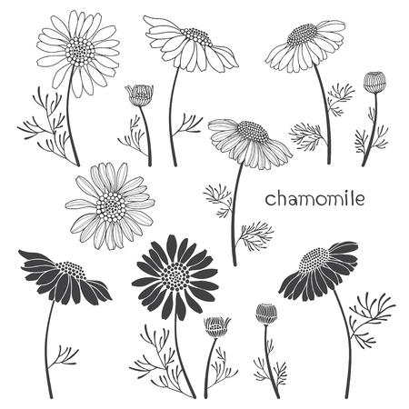 Verschiedene Arten Von Vector Blumen Und Blätter Lizenzfrei Nutzbare ...