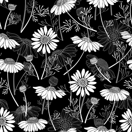camomile tea: Seamless vector pattern with chamomiles on black background. Hand-drawn floral illustration.