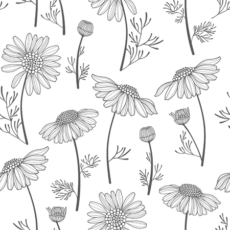 camomile tea: Seamless vector pattern with chamomiles. Hand-drawn floral background.