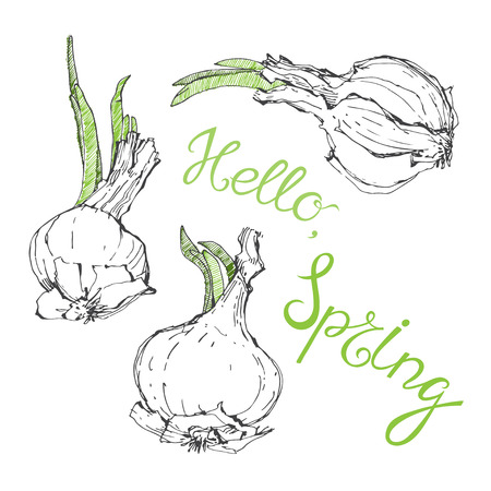 germinate: Hello, spring. Vector humorous illustration, sketch. Onion with green shoots and greeting.