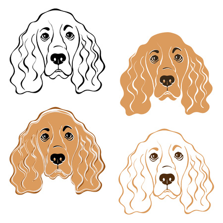 cocker spaniel: Cocker Spaniel dogs face. Hand-drawn vector illustration, isolated element for design. Sketch, four variants.