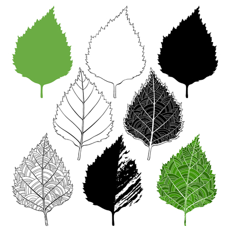 birch leaf: Birch leaf, isolated elements for design on a white background. Vector set, hand drawn illustration.