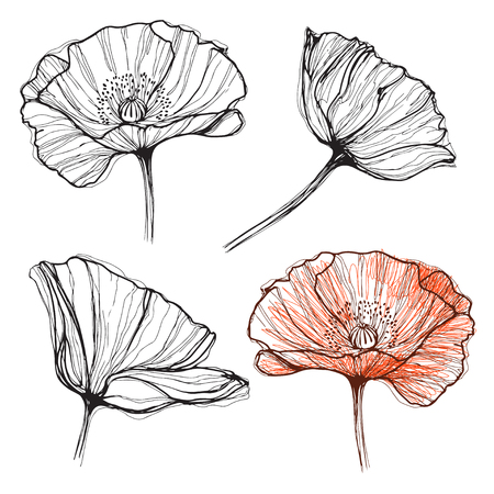 Poppy, isolated elements for design on a white background. Vector set, hand drawn illustration.