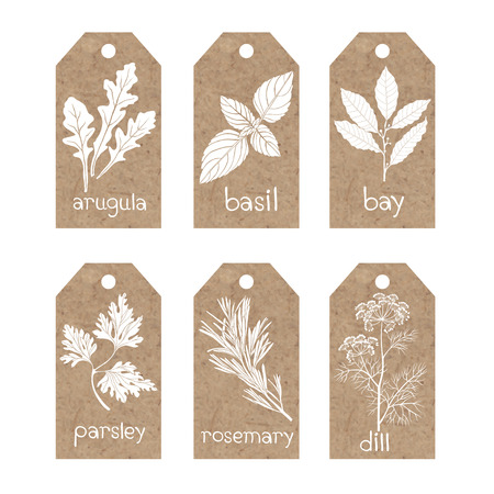 Collection of kraft paper tags with culinary herbs and spices. Illustration