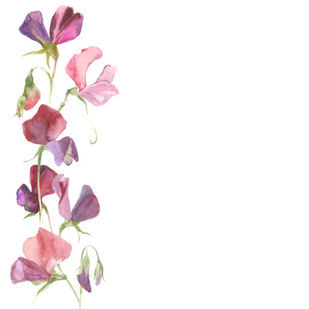 background with watercolor flowers sweet pea and place for text. Can be greeting card, invitation, design element.