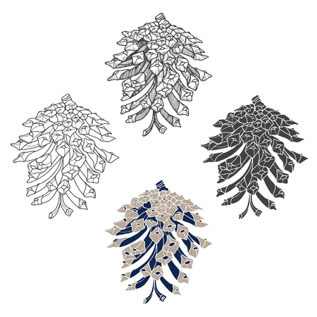 pine cones: Pine cones, isolated elements on a white background.