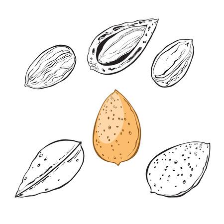 almond: Almond illustration