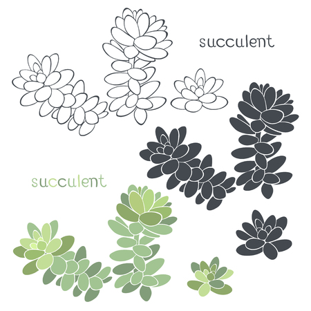 plantae: Graphic set with succulents isolated on white background.