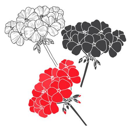 Geranium. Vector floral set on a white background. Botanical illustration, elements for design.