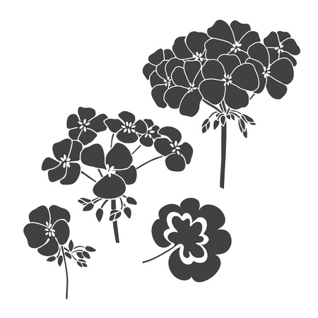 Set of flowers geranium isolated on white background. Hand drawn vector illustration, sketch. Elements for design.