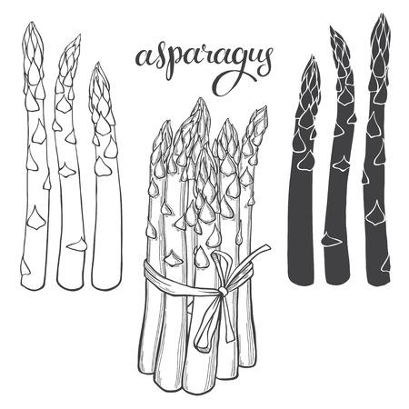 Asperges. Vector illustratie, schets op een witte achtergrond. Geïsoleerde vector handgetekende elementen voor uw ontwerp.
