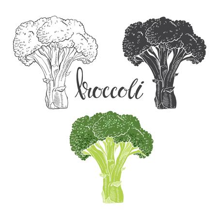 Brócoli. Ilustración del vector, dibujo sobre un fondo blanco. elementos dibujados a mano aislado vector para su diseño.