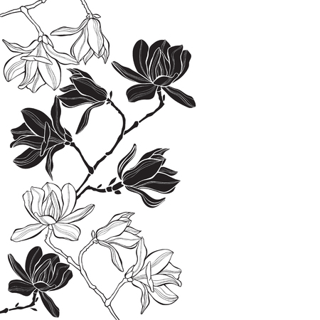 Branches with magnolia flowers on a white background. Floral background with space for text. Black and white greeting card or invitation.