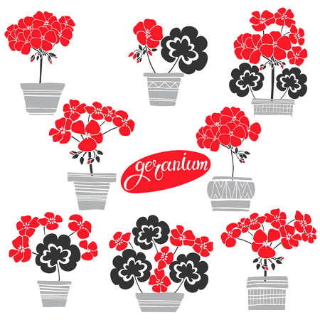 Blooming geraniums in pots. Vector illustration, isolated floral elements for design on white background.