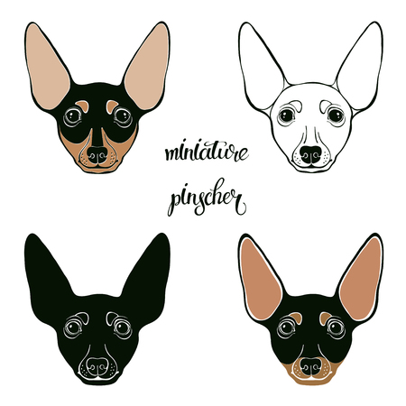 Miniature Pinscher. Vector set of pinschers face. Hand-drawn vector illustration on a white background. Sketch, four isolated variants. Illustration