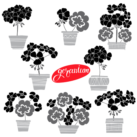 Blooming geraniums in pots. Vector illustration, isolated floral elements for design. Silhouette monochrome illustration on white background.