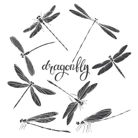 Dragonfly. Silhouettes. Vector illustration on white background. Isolated elements for design, eight insects. Ilustração