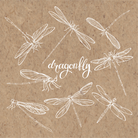 entomology: Dragonfly. Vector set. Isolated hand-drawn elements on kraft paper.