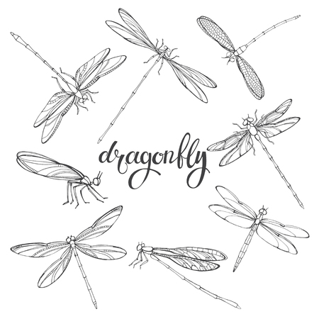 entomology: Dragonfly. Vector contour illustration on white background. Isolated elements for design, eight insects. Illustration