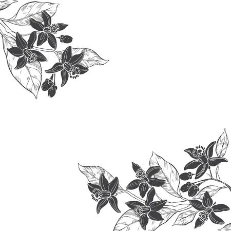 Sfondo floreale con rami disegnati a mano di fiori neroli. Illustrazione vettoriale su sfondo bianco con posto per il testo. Invito, biglietto di auguri o un elemento per il tuo design. Archivio Fotografico - 85353524