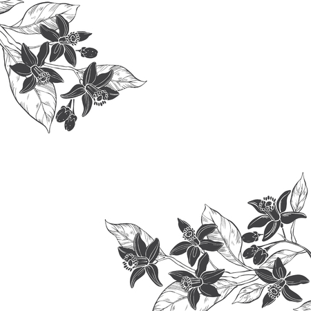 Floral background with hand-drawn branches of flowers neroli. Vector illustration on white background with place for text. Invitation, greeting card or an element for your design.