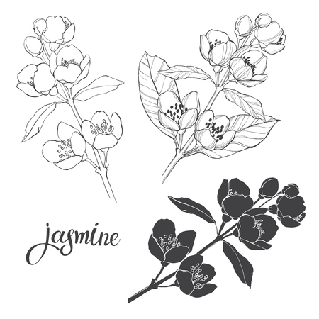 Jasmine. Three isolated vector floral elements for design. Black silhouette and outline on a white background. Иллюстрация