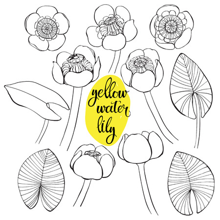 Yellow water lily. Vector illustration, isolated floral elements for design. Contour monochrome illustration isolated on white background Illustration