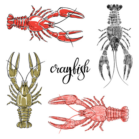 Crayfish.Hand drawn vector illustration, isolated elements for design on white background.