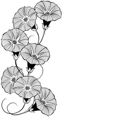 Floral design with bindweed on a white background. Vector illustration with place for text. Greeting card, invitation or isolated elements for design.Vertical composition.