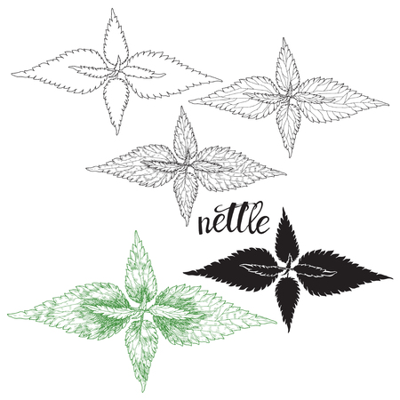 Nettle isolated on white background. Hand drawn vector illustration, sketch. Elements for design. Ilustracja