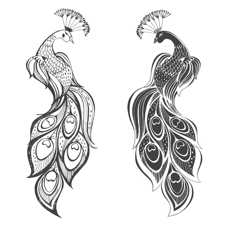 Peacocks Vector illustration, two variants. Isolated elements on white background.