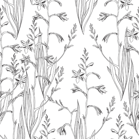 Seamless floral pattern with montbretia. Vector outline monochrome illustration on a white background. Standard-Bild - 110681146