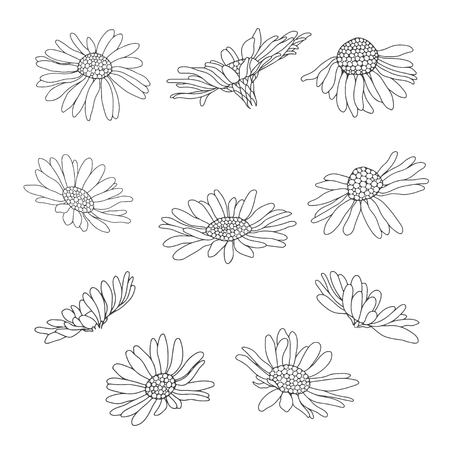 Daisy flowers.Sketch. Hand draw vector floral pattern for design on white background.Outline.