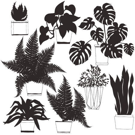 Houseplants in pot.Vector hand-drawn illustration. Isolated silhouettes on white background. Home decorations. Illustration