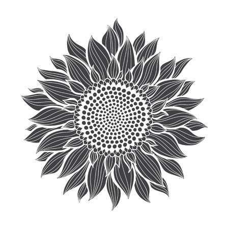 Girasoli isolati su sfondo bianco. Illustrazione botanica di vettore. Silhouette. Vettoriali